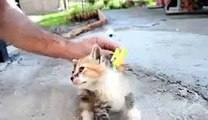 funny cats compilation,chaton mignon,chat amuse,drole low