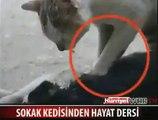 Conmovedor video muestra a un gato intentando revivir a su compañera felina tras ser atropellada