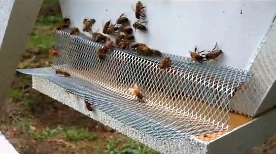 Honey Bee Robbing Protection