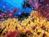 Diaporama sur les animaux #2  les animaux sous marins #
