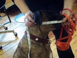 Muzzle Tutorial: How to take your dog's measurments for a perfectly fitting basket muzzle