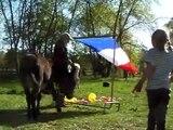 Esel-Bodenarbeitskurs 2011