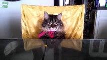 lustige Hunde und Katzen - Katzen und Hunde können auch wie ein Mensch sitzen