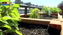 Des chefs cuisiniers adeptes des jardins sur les toits à Paris