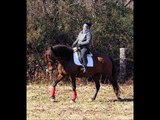 Aria 2005 PURE SPANISH Andalusian Mare FOR SALE!!
