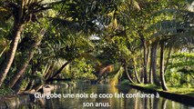 Les plus beaux Citations-Proverbes Africains