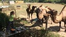 Parc animalier d'Écouves