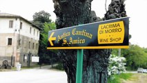 Wine from Le Marche: Visiting Vineyards & Bottling Wine in Italy (Our Life in Le Marche)
