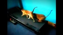Funny Cats Compilation  Funny Mean Cats!