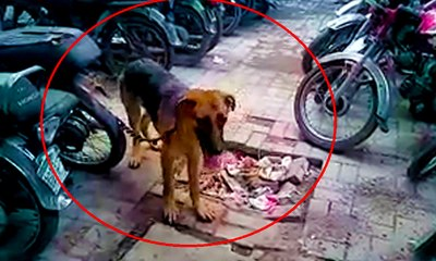 Lahore Police arrested two dogs