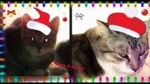 Buon Natale! HD- Merry Christmas!