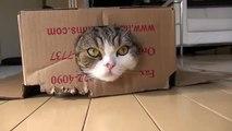 я кот мару 4 .Японский кот Мару .японский кот