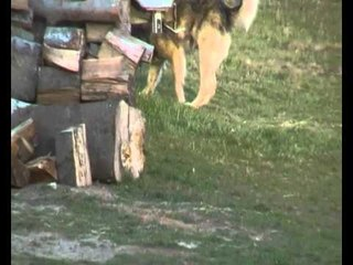 Hund von Edmond Uksmajli qeni sharit
