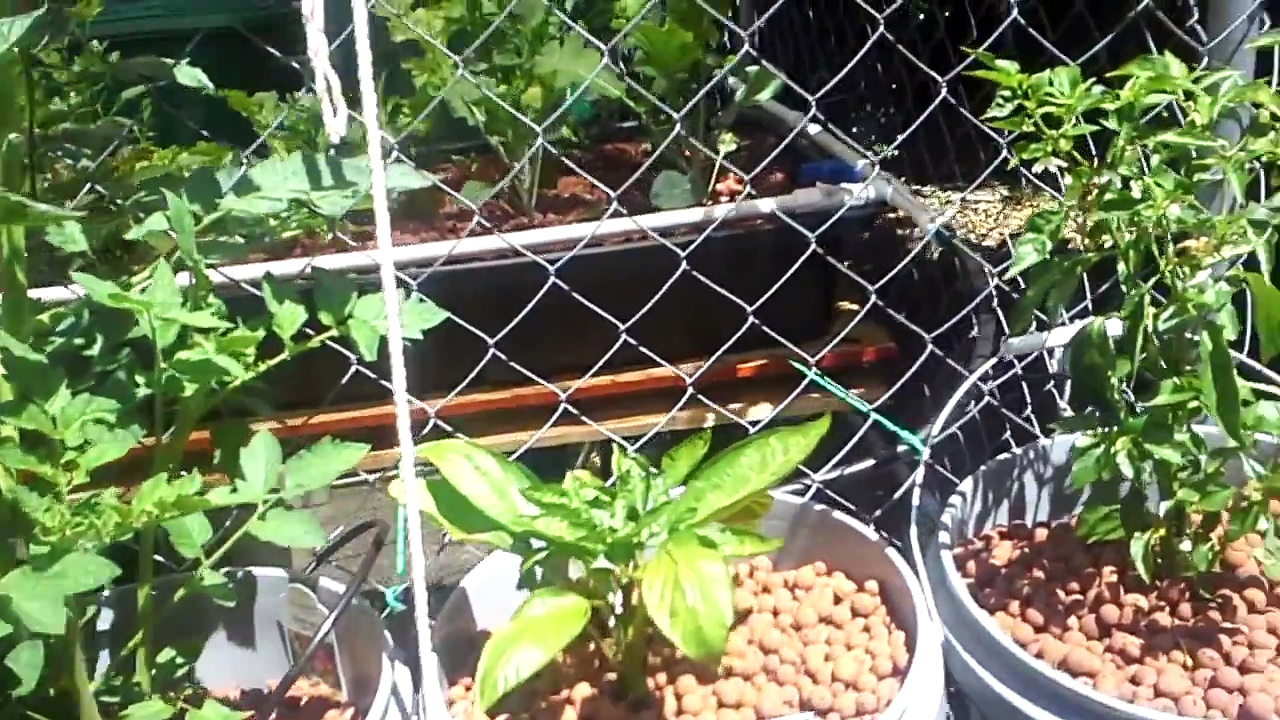 aquaponics update at Tactical Woodgas June 2015