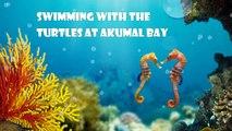 Akumal Beach Sea Turtle Adventure - April 2013.  Swimming with Sea Turtles.