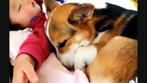 Cute Babies Laughing While Sleeping    Funny Dogs and Babies   Cute Dogs And Adorable Babies