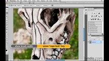 Photoshop: Using the Magnetic Lasso tool | lynda.com tutorial