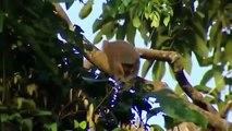 Monkey wildlife   Animals & Documentary Channel 2015   wildlife animal Geographic #007