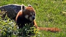 Billeder fra Ree Park Ebeltoft Safari / Photos from Ree Park Ebeltoft Safari