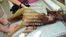 sehr berührend - sterbender Hund kämpft sich zurück ins Leben