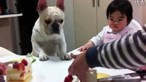 Top Funniest Baby Videos ● 20 Min Laughing videos, Cute Babies, Funny Videos #1