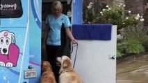 San Diego Mobile Pet Grooming