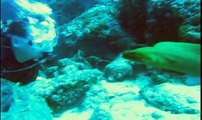 Virtual Dive: Moray Eeel l www.AquaSportsInc.com l Scuba Diving l Florida l Fort Lauderdale l Ft Lauderdale l Pompano l Miami l Key Largo l Keys l Bahamas
