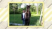 Black Bear Hunting Packages | Black Bear Hunting