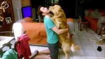 Queste sono le feste che Tobia, cane golden retriever, ogni sera riserva al suo Papi