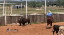 CRQH Dispersal Sale - Lot 03: Cowboy Nus  - Shiners Lena Doc X Annies Nu Lena