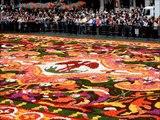 Bruxelles 10  -  Tapis de fleurs dans la Grande Place