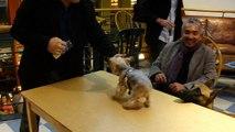 Rick Caran and Jilli Dog Meet Cesar Millan - The Dog Whisperer