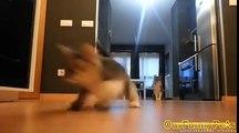 Funny Videos 2015 | Funny Vines Cats | Funny fails Cats Videos | Funny Cat Videos | Cool Crazy Cats