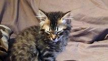 chat qui dort debout