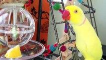 Sunday With Birdies