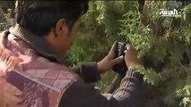 الطائف تحتضن محمية خاصة للمحافظة على النمر العربي
