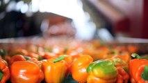 Bachelor of Food and Agribusiness