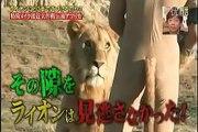 Jeu TV japonais très dangereux - Un homme joue avec des lions