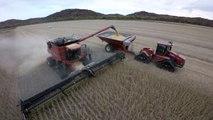 Davis Farms combining Merschman Memphis 1243RR2 with Case IH 9230 combine on tracks