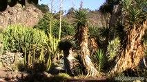 Canary Garden - Jardín Canario o Jardín Botánico Viera y Clavijo - Gran Canaria