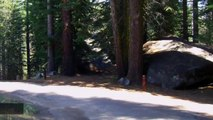 California Child Contracts Plague In Yosemite National Park