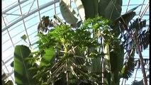 Plantation de la Serre Tropicale du Zoo de Vincennes