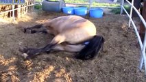 ❤ DONKEYS Giving Birth to Baby - Animals Give Birth Compilation
