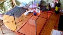Ameisen - Lasius niger Videobericht #05