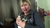 Big Day of Giving - Kittens  Dumped at the Dump