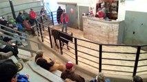 Crazy Cow @ auction