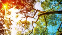 New Age Music | instrumental Music | Independent Music | Original Music | New Music;relaxing music