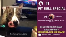 Best Pit Bull terrier vines Dog vine compilation July Ep 1 Funny American Pit bulls videos