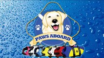 Dogs Surfing - Competition Dog Surfers aka: SurFurs- Paws Aboard Life Jackets