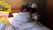 chiens mignons réveiller propriétaires  drôle de chien compilation
